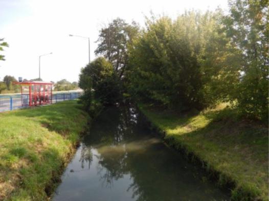 kanał Trynka